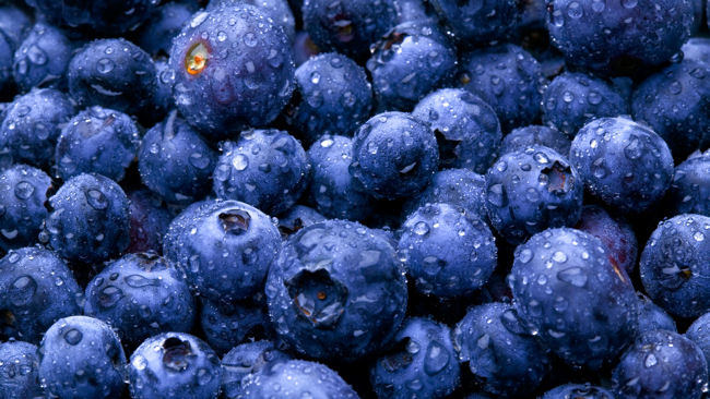 Cancer Researchers Say Blueberries May Control Breast Cancer Tumor Growth