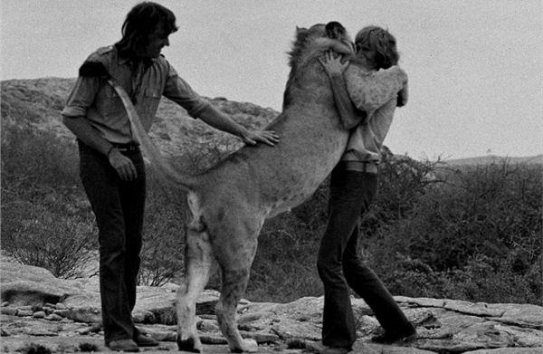 Christian the Lion hugs old friends