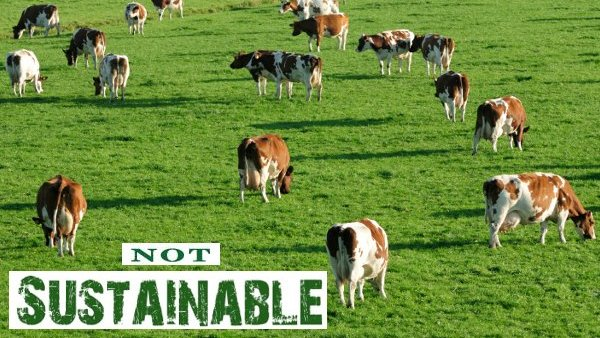 The Myth of Sustainable Meat