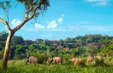 Spa Getaway & Elephant Research in Northern Thailand