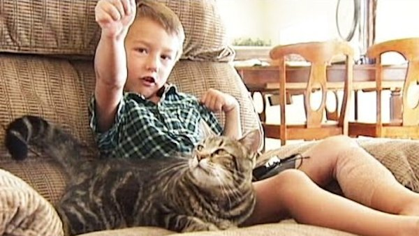 Family Cat Saves Little Boy From Dog Attack