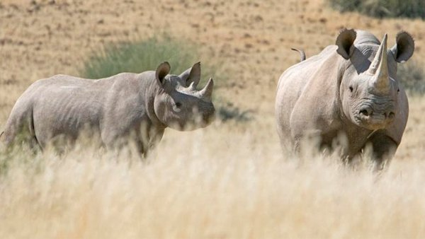 Namibia: In Search of the Endangered Desert Rhino