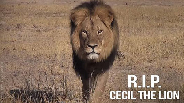 In Memory of Cecil, 2002-2015