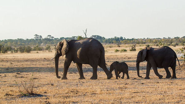 Travel Industry Unites for Elephants
