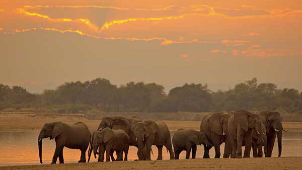 African Travel, Inc. Partners with WildAid to Celebrate World Elephant Day