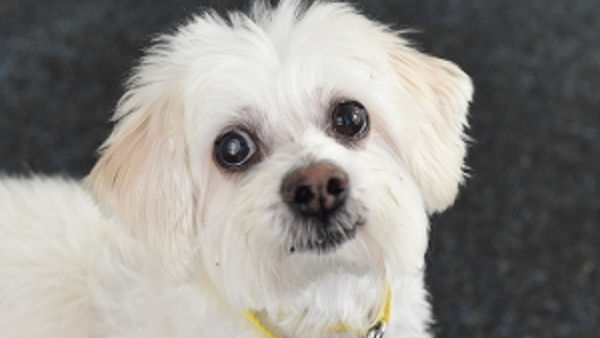 ASPCA Pet of the Week: Boo Boo
