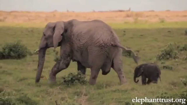Elephant Mother-Baby Love is Precious