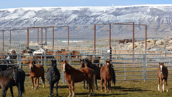 Rock Springs Wild Horse Holding Facility