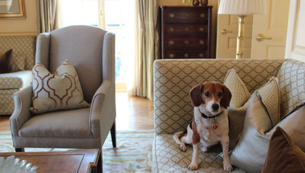 The Power of Pet Therapy at Hotels