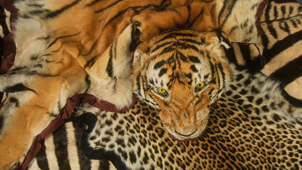 Travel Trade Industry Joins Coalition to Combat Wildlife Trafficking Worldwide