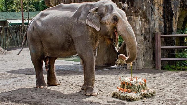 Outrage at Oregon 'Zoothanasia' Murder of Packy The Elephant