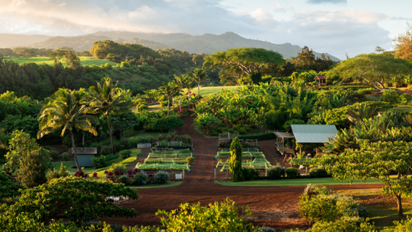 Kauai wellness retreat