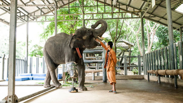 Visit The World's First Elephant Hospital
