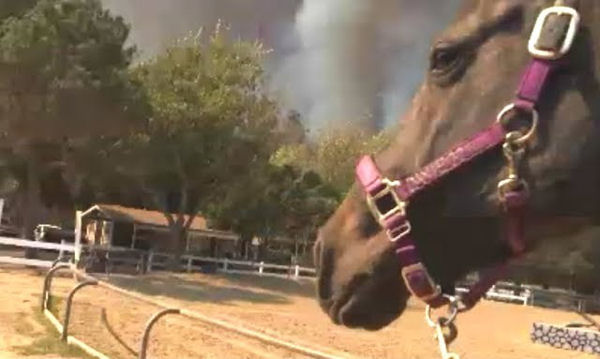Animals Fleeing Wildfires Get Aid from In Defense of Animals