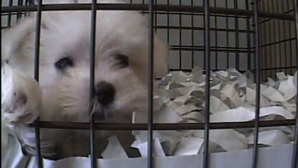 California Signs in Significant Animal Protection Law