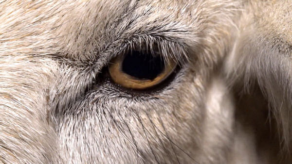 Dominion: THE Animal Rights Film of 2018 Launches Crowdfunding Campaign