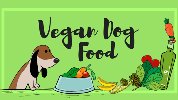 Vegan Dog Food – Everything You Want To Know