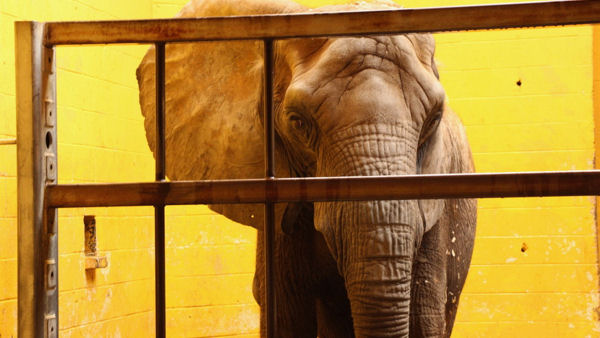 10 Worst Zoos for Elephants Exposed by In Defense of Animals